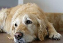 πέθανε ο σκύλος τι να κάνω